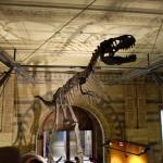 【特集】子供が恐竜を好きな秘密。<br>それは教育にあった!