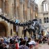 【特集】英語で恐竜について学ぼう!<br>恐竜コンテンツ 5選